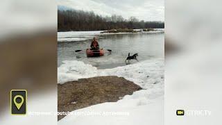 В Башкирии с дрейфующей льдины спасли собаку - видео