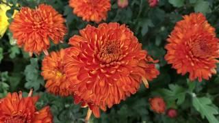 Сад для души начало осени / садоводство для души