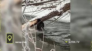 В Башкирии бобры готовятся к зиме - видео