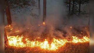 В Башкирии горит 76 гектаров леса