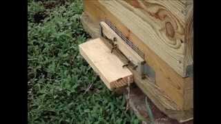 Семья пчел ,привезенная из Башкирии,на точке.