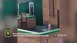 В Уфе девочка решила выгулять собаку на крыше многоэтажки