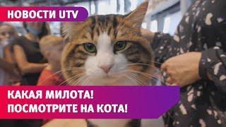 Какая милота! Посмотрите, каких кошек держат уфимцы