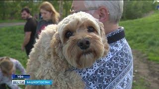 Уфимцы жалуются на отсутствие площадок для выгула собак