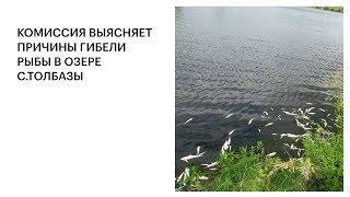 КОМИССИЯ ВЫЯСНЯЕТ ПРИЧИНЫ ГИБЕЛИ РЫБЫ В ОЗЕРЕ С.ТОЛБАЗЫ