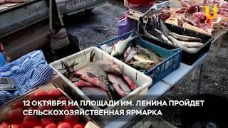 Новости UTV. 12 октября состоится ярмарка на пл. Ленина
