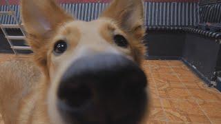 UTV. В Уфе откроется кафе, где можно будет поиграть с собаками, а понравившуюся забрать домой
