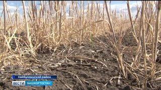 Из-за засухи в шести районах Башкирии ввели режим ЧС