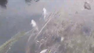 UTV. В Башкирии из-за нештатной ситуации на заводе неочищенные стоки попали в реку.