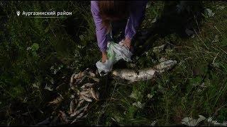 В Башкирии расследуют причины массовой гибели рыбы в пруду села Толбазы