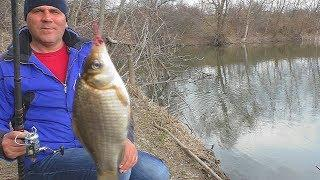 Рыбалка. Карась с берега весной на поплавок. [ловля 2019] My fishing