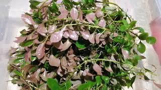 Аквариумные растения из г. Салават