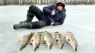 Пузатые Щуки по Последнему Льду.Рыбалка в Башкирии.Река Белая.