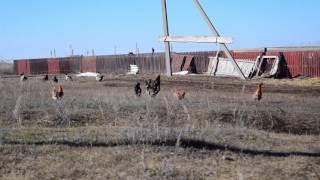 Отпуск на Родине Россия(Стерлитамак, Веденовка)