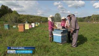 Семья пчеловодов из Башкирии сделала из обычной пасеки местную достопримечательность