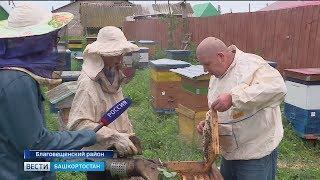 В Башкирии пчеловоды приступили к качке меда