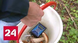 Ядовитое лукошко: грибы и ягоды в российских лесах заражены радиацией - Россия 24