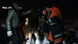 Спасатели достали лошадь из полыньи