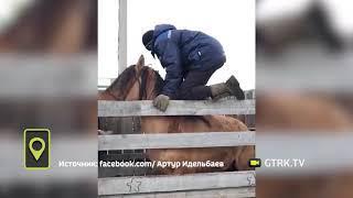 Жители Башкирии сняли на видео приручение непокорного жеребца