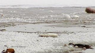 Бия и Катунь определят, насколько сильным будет паводок в Югре