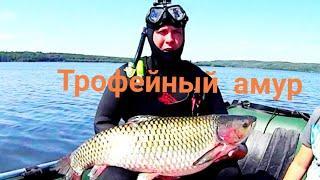 подводная охота в Башкирии.Трофейный Белый Амур!!!