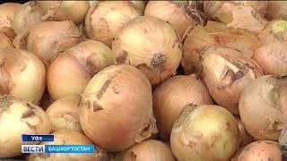 В Башкирии лук-севок резко взлетел в цене и почти пропал с прилавков магазинов