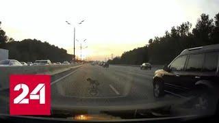 """""""Стой, друг!"""": водители совместными усилиями спасли застрявшую на МКАД собаку - Россия 24"""