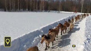 «Людям стоит поучиться»: удивительное видео с лошадьми сняли в Башкирии