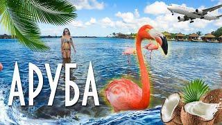 АРУБА - голландские Карибы: лучший пляж мира, розовые фламинго и древние пещерные рисунки