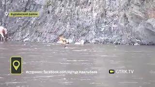 Хорошо плывут: в Бурзянском районе Башкирии засняли водоплавающих буренок