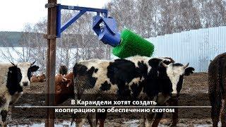 UTV. Новости севера Башкирии за 26 марта (Бирск, Мишкино, Бураево)