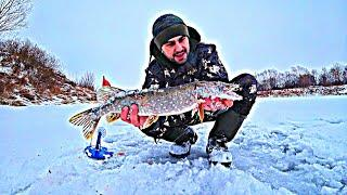 Клюёт Весь День | Такие Рыбалки Я Люблю!!! | Ловля Щуки Зимой на Жерлицы на Живца.