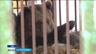 В уфимском вольере медведица Маша впервые показала людям своих медвежат