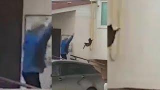 Жители прогнали лося, швырнув в него кота