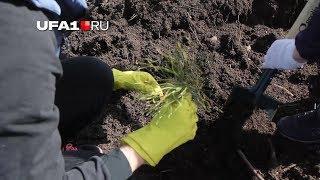 Волонтеры посадили дерево