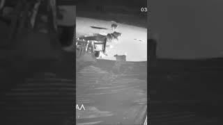 Волки напали на собак в Башкирии