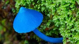 Неизвестные съедобные грибы