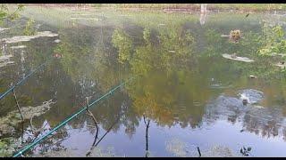 Рыбалка на удочку на пруду.