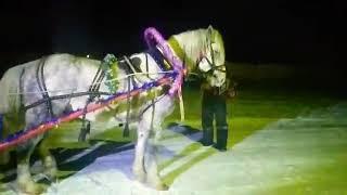 Белорецкий район д. Кузгун-Ахмерово.Новогодние праздники. Лошадь по кличке Буян танцует лезгинку.