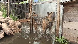 В поселке Максимовка под Уфой водой затопило дома и земельные участки