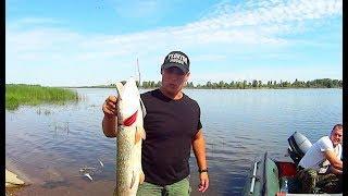 Рыбалка на реке Белая.ловим судака и щуку.