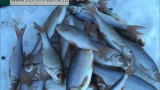 Отдых и рыбалка на  Банном