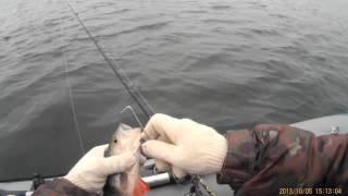 рыбалка на р.Белой, п.Агидель. 05-06.10.2013г.
