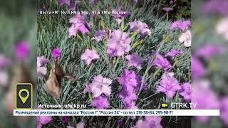 В Башкирии обнаружили занесенную в Красную книгу бабочку бражник