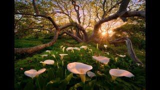 Красивая природа под красивую музыку.