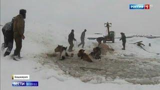 """Вода была ледяная"""": в Башкирии спасли 11 тонущих лошадей"""
