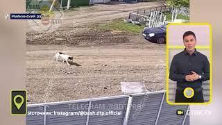 Дерзкое ограбление: пес-воришка попал на камеру видеонаблюдения в Башкирии