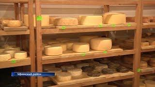 В уфимском районе осваивают производство сыров по старинным рецептам