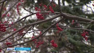 В Башкирии в выходные резко похолодает