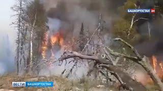 «Вторые сутки горит лес»: в Белорецком районе Башкирии спасатели и местные жители борются с огнем